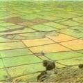 Tarımsal üretim alanları